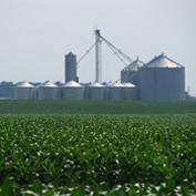 Bloomfield Farm