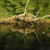 Marshyhope Preserve