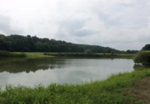 1172 acres in QAC