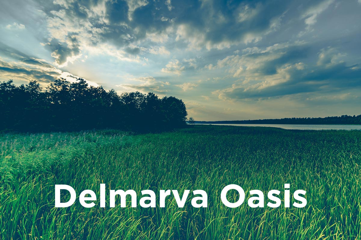 Delmarva Oasis Eastern Shore Maryland
